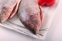 Tilapia fish. Raw Tilapia fish on white plate Royalty Free Stock Photo