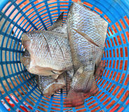 Tilapia fish Royalty Free Stock Images