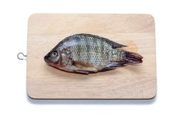 Tilapia fish on wooden board on white. Background stock image