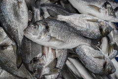 Tilapia fishes in a local market Stock Photos