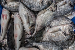 Tilapia fishes in a local market Royalty Free Stock Images