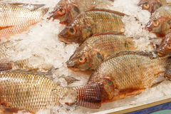 Tilapia inside ice for sell Royalty Free Stock Photography