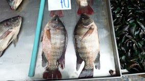 Tilapia Live Fish Lie i torra Pan With Gills Working Waiting som ska säljs för matställe stock video
