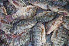 Tilapia, pescado seco, Tailandia Foto de archivo libre de regalías