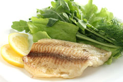 Tilapia with rucola and lettuce Stock Photography