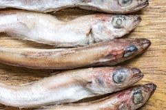 Tilapia rybi ścierwa Zdjęcia Royalty Free