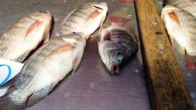Tilapia ryby kłamstwo w Suchej niecce Z blaszkami Pracuje czekanie Sprzedawać Dla Obiadowego Frontowego widoku zdjęcie wideo