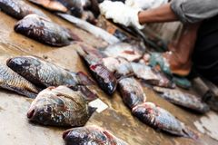Tilapia. And sale of  in Thailand stock images