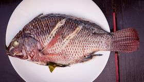 Tilapia steam. Tilapia fish steam on dish royalty free stock photos