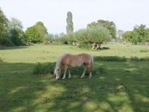 Tilburg konia wieś Fotografia Royalty Free