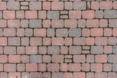 Tile. Bruschatnye colored tiled walkways diced Royalty Free Stock Images