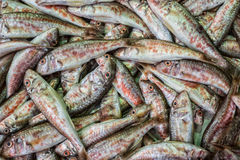 Tile of fishes Stock Images