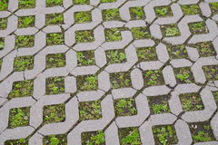 Tile floor with grass Royalty Free Stock Photo
