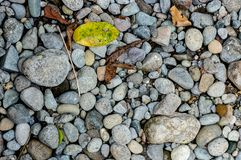 River stones tile with some leaves. Tile of river stones defused lighting to avoid harsh shadows royalty free stock photography