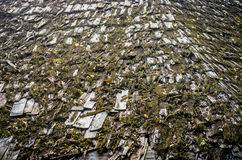 Tile roof with moss Stock Images