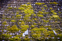 Tile roof with moss Royalty Free Stock Images