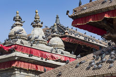 Tile roofs with many birds on the Durbar square in Khatmandu, Ne Royalty Free Stock Photos