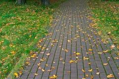Tile ,track, sidewalk, street, styling, coating, pavement, paving. Paving slabs, driveway paving, coating colored paving tiles Stock Images
