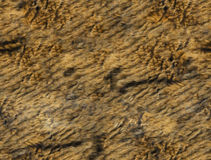 Tileable Tiger Fur Texture Foto de Stock