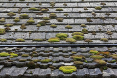 Tiled Country Roof Covered with Moss Stock Image