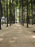 Tiled grove in Kuala Lumpur / DBKL Park. Clean, tiled, neatly arranged forest in KL Stock Photography