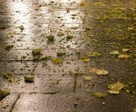 Tiled parkerar jordning på höstnatten Bakgrund royaltyfria foton