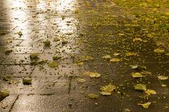 Tiled parkerar jordning på höstnatten Bakgrund royaltyfri foto