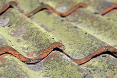 Tiled roof with fungus Royalty Free Stock Photography