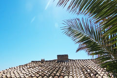Tiled roof and palm tree Royalty Free Stock Photography