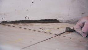 Tiler βάζει τα κεραμίδια στενό στον επάνω πατωμάτων φιλμ μικρού μήκους