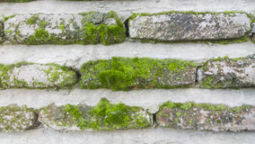 Tiles of old brick with Moss Royalty Free Stock Image