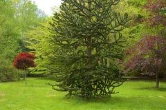 Tilgatepark, West-Sussex, Engeland stock foto