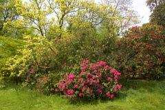 Tilgatepark, West-Sussex, Engeland royalty-vrije stock foto