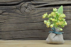 Tilia flowers Stock Image