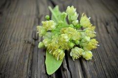 Tilia flowers Stock Photo
