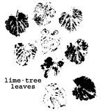 Tilia grunge leaves Royalty Free Stock Image
