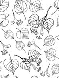 Tilia seamless pattern Royalty Free Stock Images