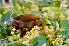 Tilia Tea. Royalty Free Stock Images