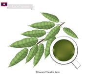 Tiliacora Triandra deixa o suco, bebida popular do Lao ilustração do vetor