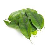 Tiliacora triandra & x28; 在泰国name& x29的Baiya nang;隔绝在白色 免版税库存照片