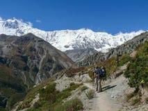 Tilicho peak, way to Tilicho base camp, Nepal Royalty Free Stock Images