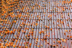 Tiling roof with autumnal leaves Stock Photo