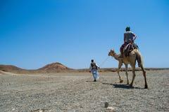 Till och med den ökenSahara mannen på en kamel Arkivbilder