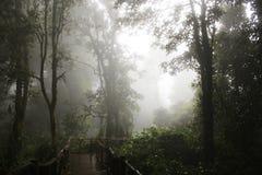 Till och med dimman Arkivfoto