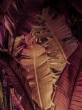 Till och med djungeln 1 Arkivfoton