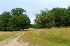 Till och med fältet till skogen Arkivfoto