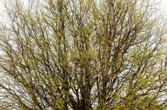 Till och med trädet Arkivbild