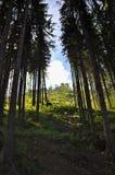 Till och med treesna Fotografering för Bildbyråer