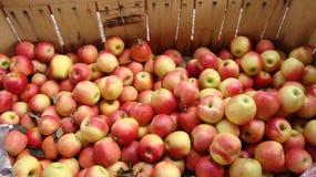 Till salu äpplen arkivbild