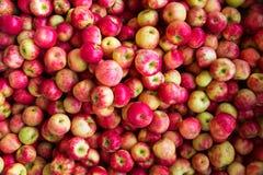 Till salu äpplen Royaltyfri Fotografi